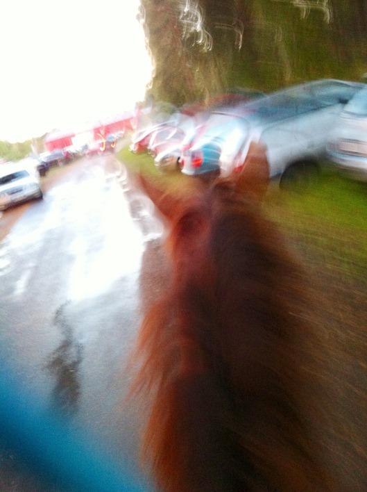 Såhär stadig och fin bild blir det när man sitter på en häst som skrittar FORT!