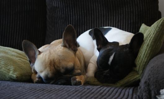 Dessa två tycker också att det är rätt gött att chilla i soffan en regnig dag. :)
