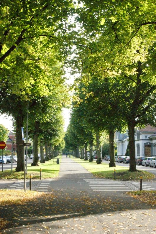 Det är fortfarande väldigt grönt i träden...