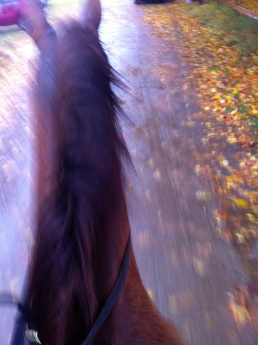Såhär bra bild blir det när man sitter på en häst som taktar fram, haha.