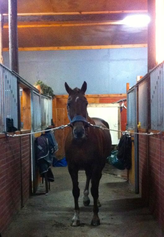 Blöt häst efter ridtur.