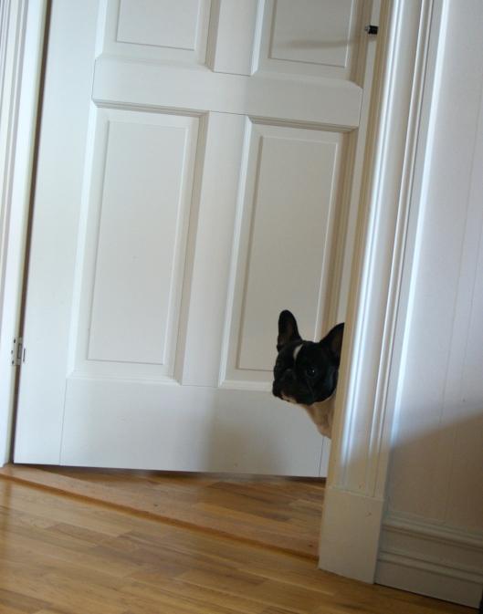 Selma blev lite nyfiken när jag fotade och kikade ut i vardagsrummet :)